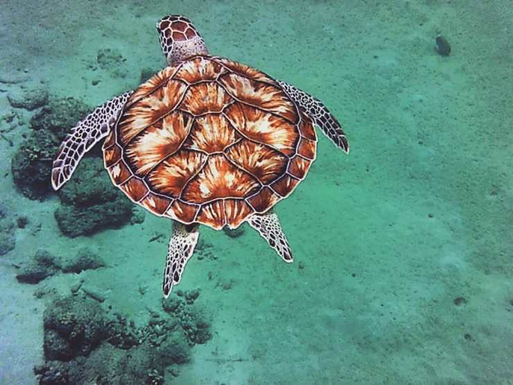 Sea Turtle on Curacao